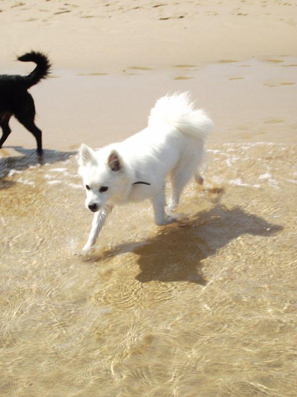 Journée à la plage !