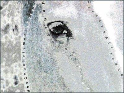 voir le monde dans les yeux d'un cheval...