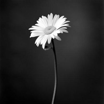 Photo noir & blanc suite