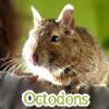 x-Octodons