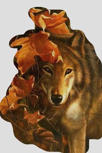 beauté louve
