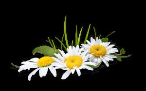 La fleur est courte, mais la joie qu'elle a donnée une minute n'est pas de ces choses qui ont commencement ou fin.