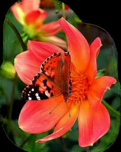 La vie réserve parfois de bien douces surprises  Met sur votre chemin des êtres d'exception  Qui en un simple instant font fondre nos banquises  Peuplant nos intérieurs d'intenses affections.
