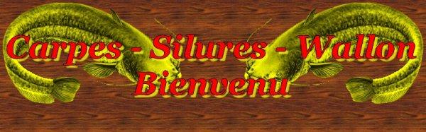 SILURES & MISS CARPES EN WALLONIE