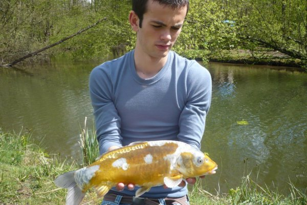 fish 100 % sauvage, vierge de toutes piqures