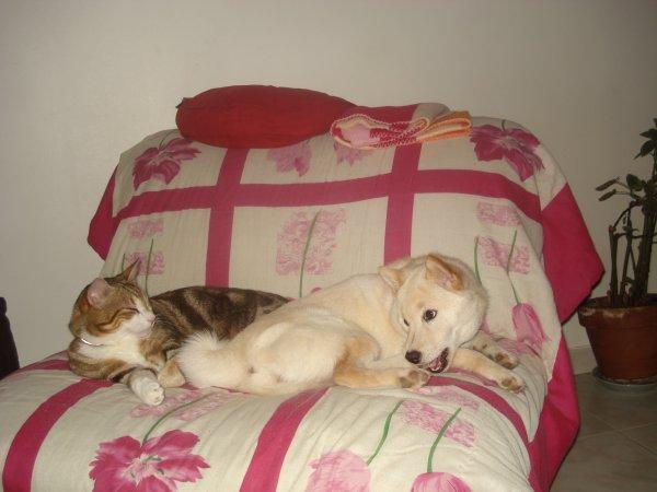 Ma belle Yumi avec le chat