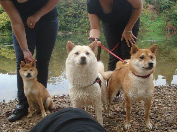 Yumi et ses autres amis Shishoux