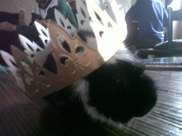 Mon petit roi à 4 pattes !