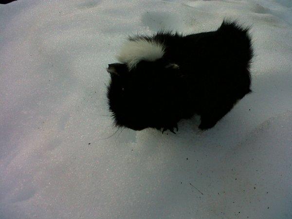 Mon petit Apollon, noir sur blanc !