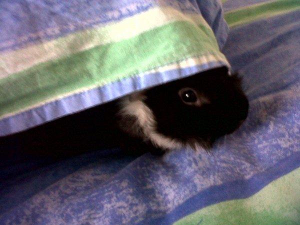 Les siestes du Loulou :)