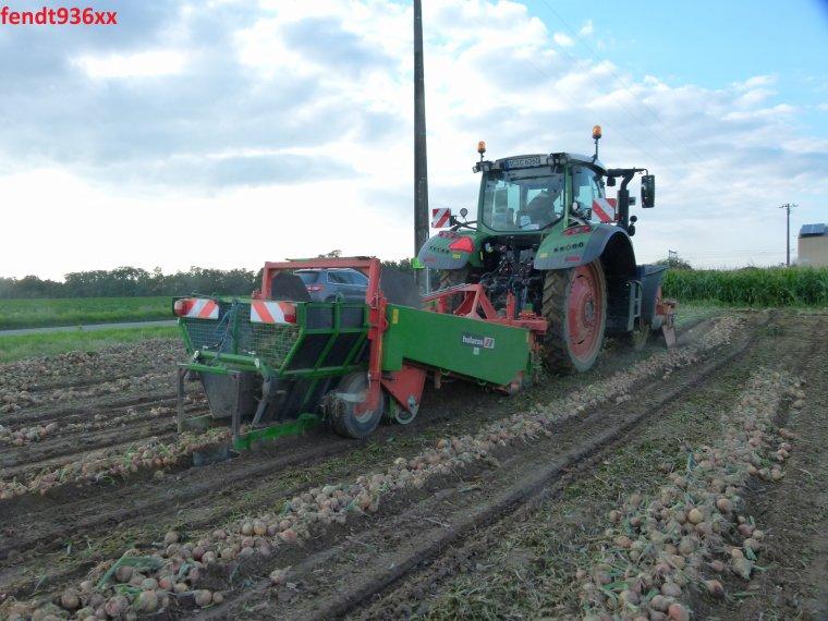 Arrachage d'oignons (Van Hoven)