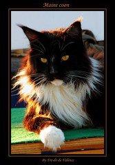 mi lynx mi chat !!!