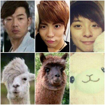 {NEWS} 120629 | Lee Jonghyuk, Jonghyun et Amber : les frères lamas ? ✰彡