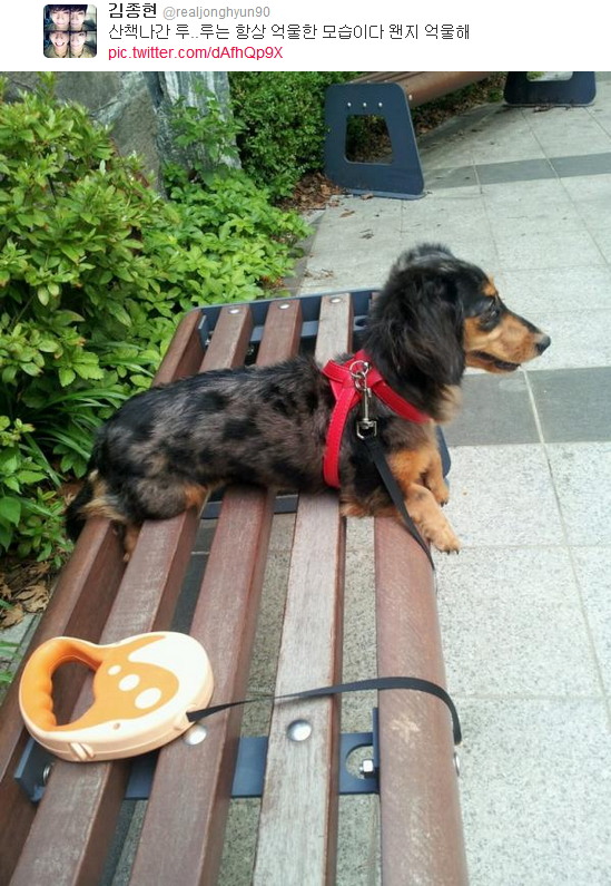 {TWITTER} 120708 | Roo est en promenade avec Jonghyun ✰彡