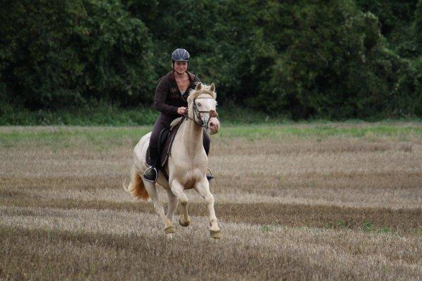 Aime ton cheval comme il est et non comme t'aimerais qu'il soit