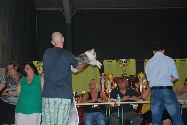 ELIOT DE LA VALLE DES NOBLE 2CACIB ET NOMMINER BEST IN SHOW