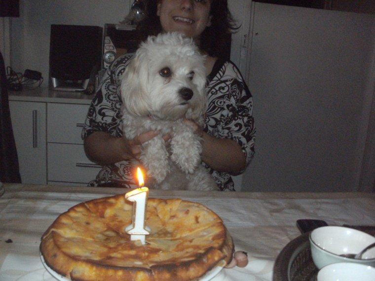 ANNIVERSAIRE DE LILIE gâteau saucisse avalée par mes chiens avec plaisir