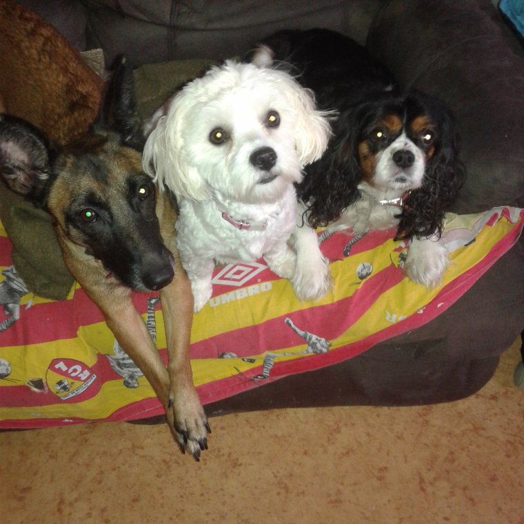 QUELQUES PHOTOS DE MES 4 CHIENS DELFY, KIMIE,LOVELY, ET LILIE