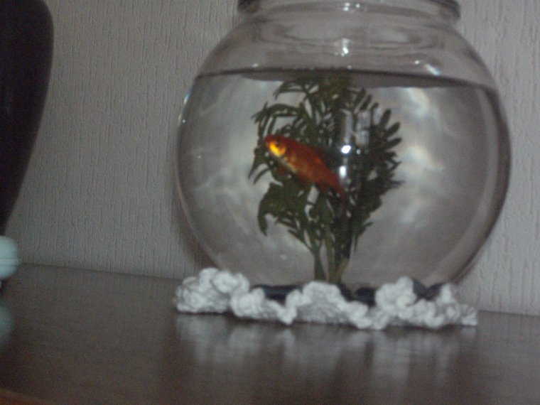 ma fille Ophélie, mon poisson rouge, ma fleur