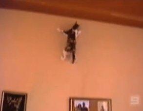 le  chat  qui  se  prend  pour   spider  man