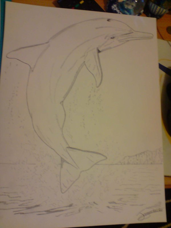 dauphin en plein saut