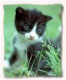 Photo de xx-I-Love-The-Cats-xx