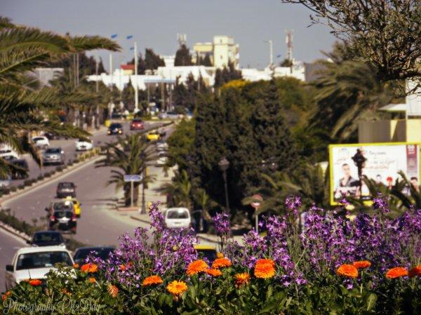 Tunisia - Sousse- Route Touristique