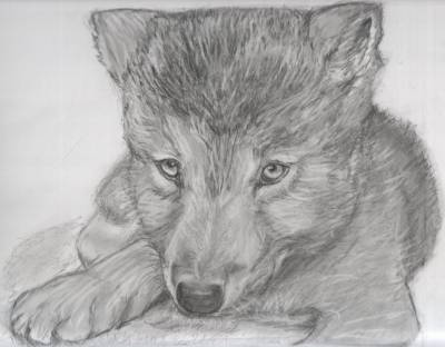 Mon petit loup mes dessins - Petit loup dessin ...