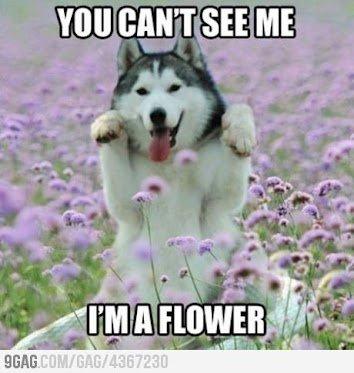 The flower ! :D