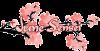 fleuredecerisier