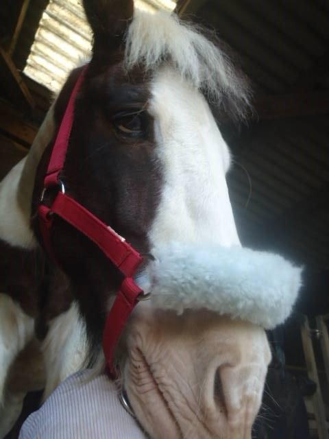 Présentations des poneys.♥