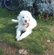 ses blanche neige ses mon chien ses encore un petit