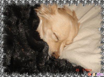 âpre avoir jouet tout la journée avec doudou je me suis endormi avec chut il et cache sou la couverture hihi