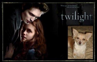 un nouvelle acteur dant twilight