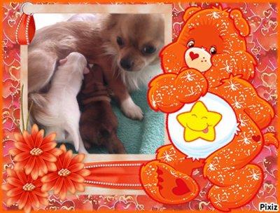voila les photo des deux petit ange comme promis se son deux beau Garçon