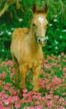 Photo de cheval3839