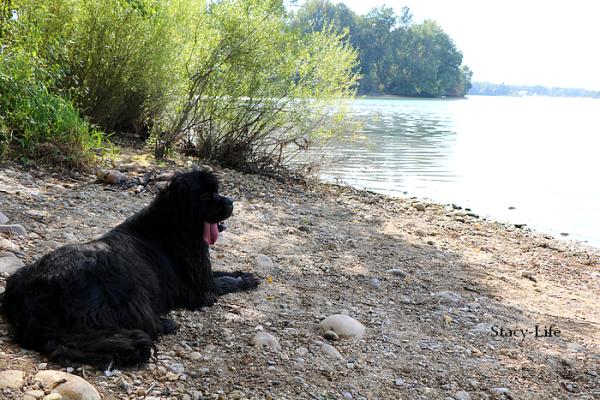 Ballade le long du lac de Miribel [12/09/16]
