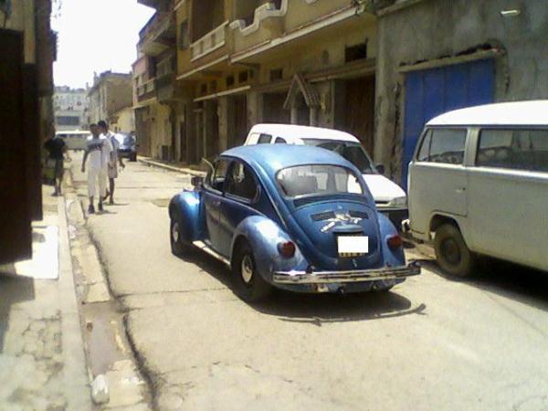 coccinelle volkswagen algerie