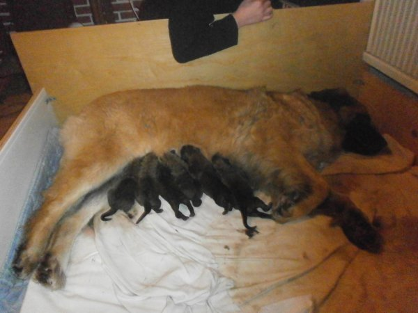 elfy a eu 8 bebes