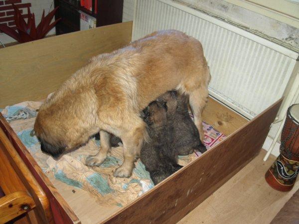 elfy et c est 8 bebes