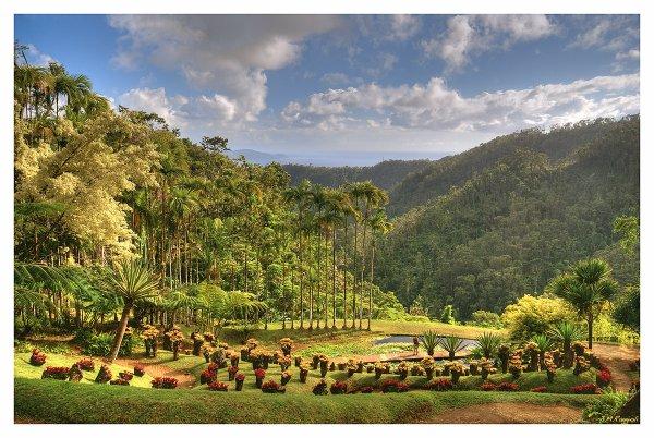 Le jardin de balata moa et ses photo des antilles et lyon for Le jardin france 5