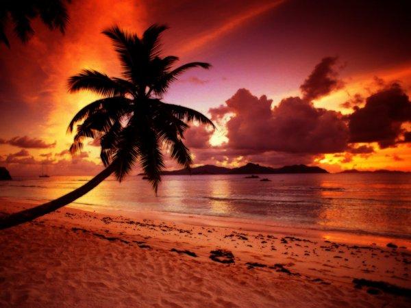 Coucher de soleil sous le cocotier en martinique moa et ses photo des antilles et lyon - Coucher de soleil en guadeloupe ...