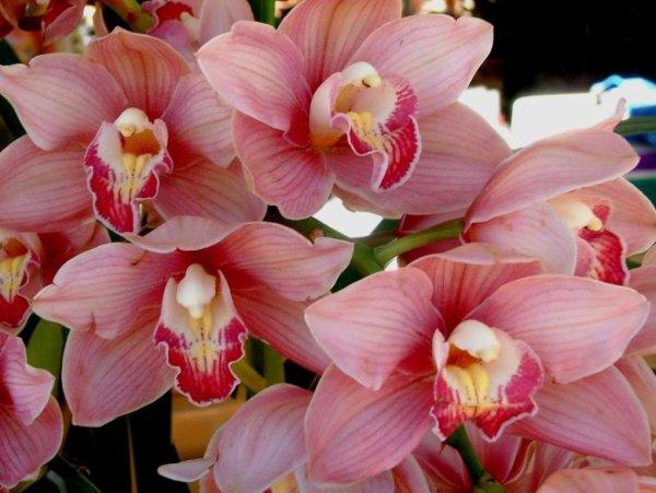offrir une orchidée, un message d'amour