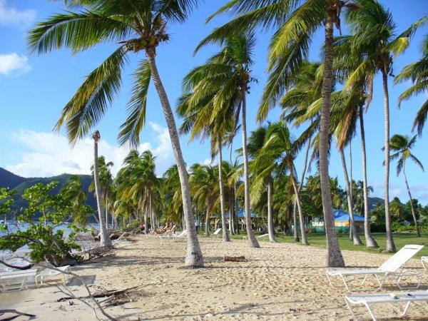 Avant l'entrée du bourg de Sainte-Anne, vous ne raterez pas cette plage indiquée sur votre droite. L'une des plages préférées des martiniquais, ils ne manquent pas de s'y retrouver entre amis ou en famille pour passer un moment convivial.