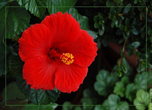 Fleurs rouges: Voici la couleur qui exprime au mieux la passion amoureuse et l'ardeur des sentiments que vous portez à l'élu de votre coeur. C'est un bouquet de fleur rouge qui dévoilera une déclaration d'amour passionnée. Il s'agit d'une couleur active, c'est la couleur de l'amour et de la passion, l'amour de la vie et aussi la couleur de la liberté.