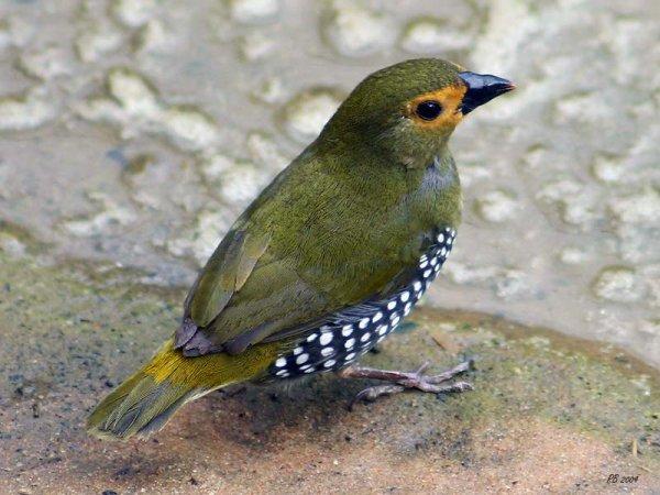 magnifiques oiseaux