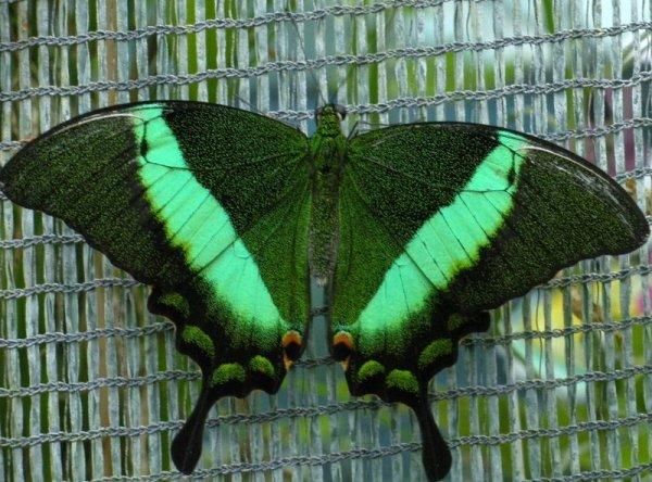 Papillonnez devant un spectacle magique