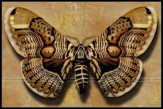 Papillon, morpho, brun, ispod, yeux, se trouve Wallpape