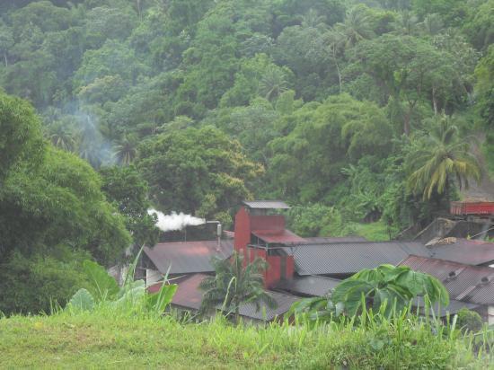 Le rhum Agricole AOC de Martinique fait partie de ces institutions culturelles liées à la culture créole martiniquaise profonde, depuis les premières plantations de canne à sucre. La Martinique produit essentiellement du rhum Agricole.