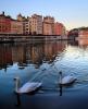Sur le miroir de la Saône, les cygnes glissent paisiblement : une belle scène du paysage lyonnais admirée depuis le quai Saint-Vincent